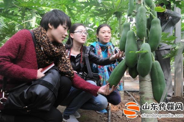 山东淄川:乡村富硒观光农业引来城里客