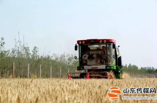 临沂罗庄区17.2万亩机械化麦收全面展开