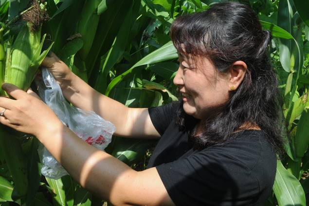 山东淄川:农家女变身新型职业农民