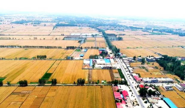 郯城县归昌乡5万余亩小麦长势喜人丰收在望