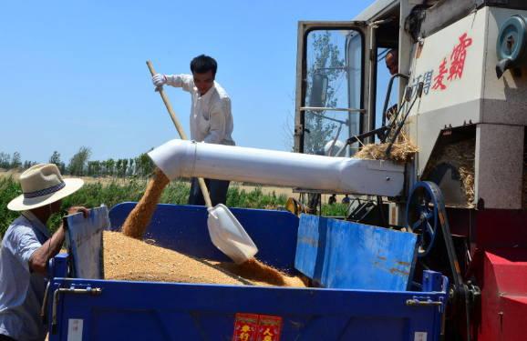 郯城县归昌乡小麦收割进入高潮