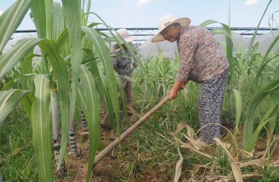山东淄川:村民不出村  就业变工人