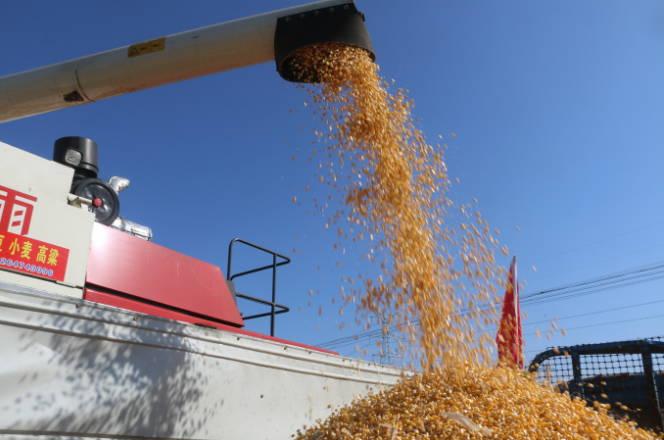 曲阜市玉米生产全程机械化现场示范观摩会在尼山镇举行