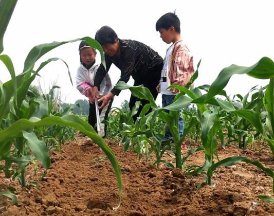 郯城:到田间去 让孩子了解务农知识