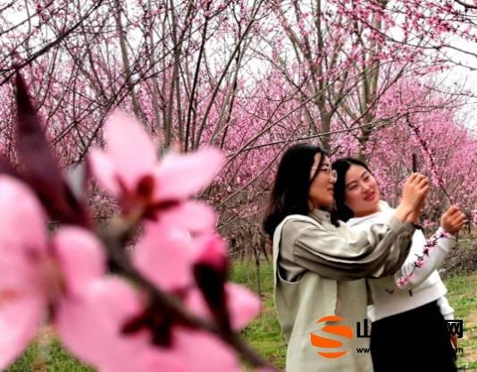 郯城马头:沂河岸边赏风景   桃花迎客入镜中