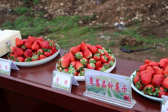郯城县花园乡为草莓产业园建设提供财力支撑
