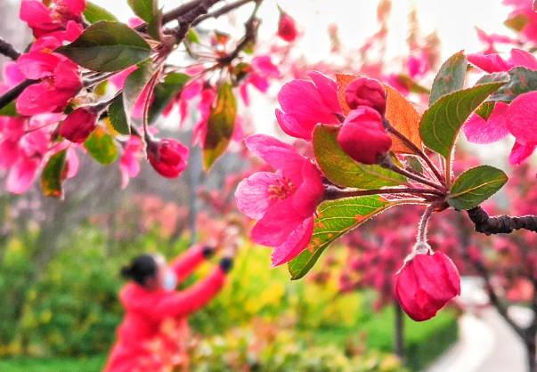 春来繁花景色美 郯子公园多游人