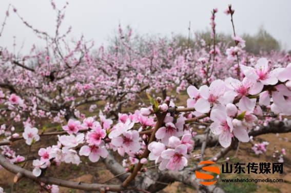 九仙山踏青赏花高峰来  贵在增加体验感