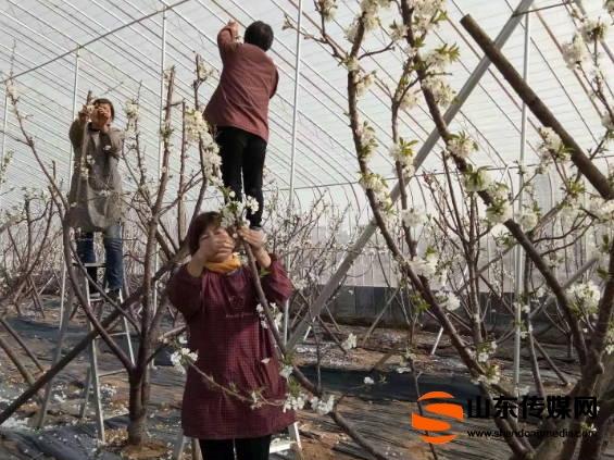 临沂临港区坪上镇春季高效农业生产采风